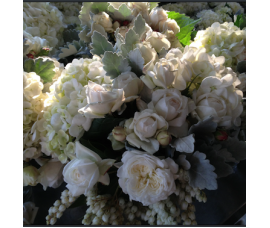 David Austin roses and Dusty miller